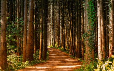 Journey in Grace – Membership Class