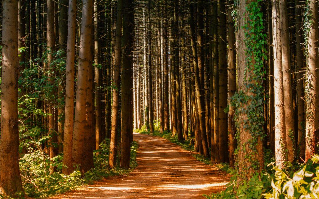 Journey in Grace